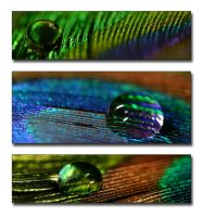 Peacock feathers triptych by AngiWallace
