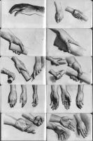 hand studies by EthicallyChallenged