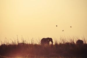 Chobe II by Caatherinee