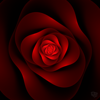 fractal rose by ThorBet