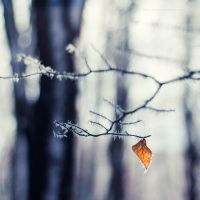...winter -1-... by OlegBreslavtsev