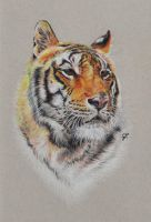Portrait of Shere Khan by GabrielGrob