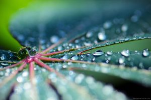 water drop by danzE26