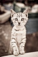 CATSERIOUS by blueanto