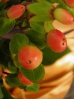 berries in a bowl by bwall49