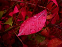 Bejeweled Autumn by Pentacle5