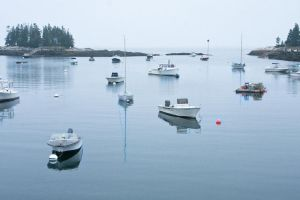 Morning Harbor by muffet1