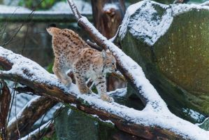 First Snow by JRL5