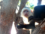 Baby Monkey by NikkiJeanne
