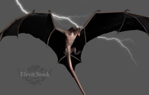E-S Draconis III by Elevit-Stock