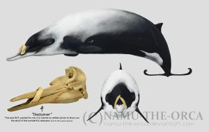 Strap-toothed whale by namu-the-orca