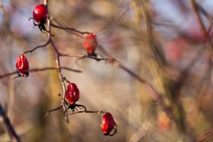 A winter canker-berry by Booba84