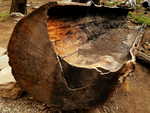 Burnt Log by livdrummer