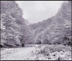 Snow by Scami