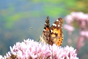 painted lady by Wuhzzles