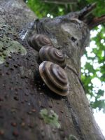 Shells by Pollito-is-Artzy