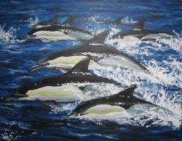 Dolphins by StephanEsterhuizen