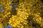 shedding of autumn leaves 11 by Armandacyd