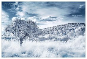 snow white by werol
