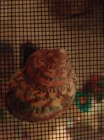 Hermit Crab Stock 3 by jackiehorse