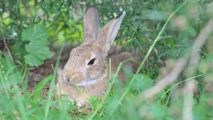 Disapproving Wild Rabbit by 18o16o