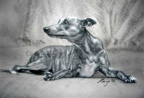 Tilly the whippet by Gwyneeth