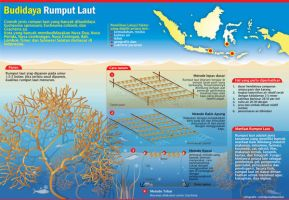 infographic grass by malesbanget