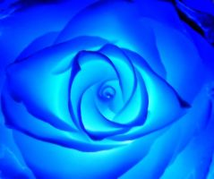 blue Rose... by stock1-2-3