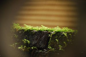 Moss in Rain by ajithrajeswari
