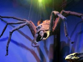 aragog the giant spider  harry potter   studio 1 by Sceptre63
