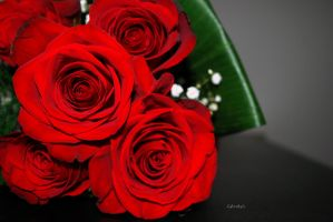 Red roses by G-gaga