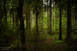 In the forest 6 by Kelshray-photo