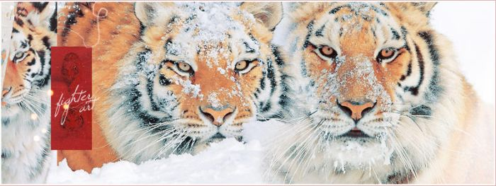 HEADER - Tigers by MaryJeanQ