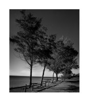 East Point Reserve by titimeh