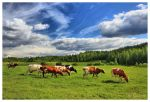 Finnish Countryside by Pajunen