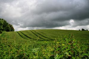 field by Tiger--photography