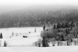 Winterspell by CharlieA-Photos