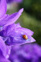 Ladybird. by Glambition
