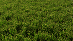 realistic grass (would love tips for improvement) by MasterChief55
