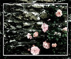 Hidden Roses... by ansdesign
