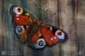 Butterfly on a wall by PoAnna