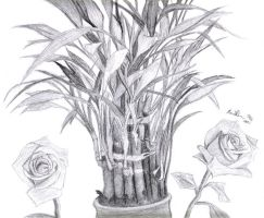 DSBA3a - Bamboo Plant by empire539