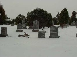Graveyards during Snow Storm 7 by ovoro