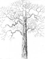 Trees by christyscottlundy