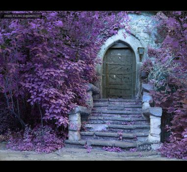 the violet way of life by greyfin
