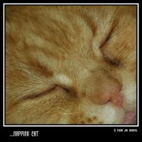 ...Napping Cat by q-118