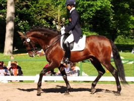 Spanish Iberian Dressage Horse Trot by LuDa-Stock
