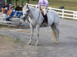 Horse show stock 12 by shush-stock
