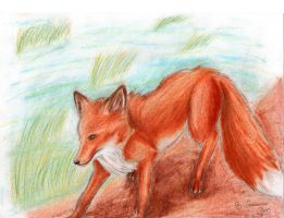 red fox by FuNiSmYwAy