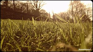 Spring Grass by benmboard